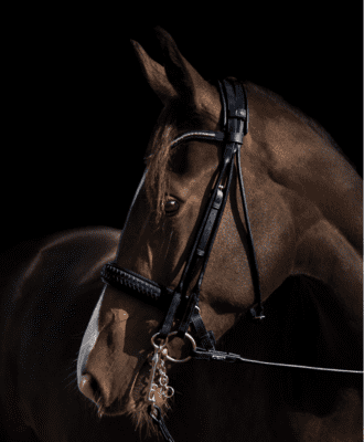 "Utzon Equestrian ""Olympic double bridle"""