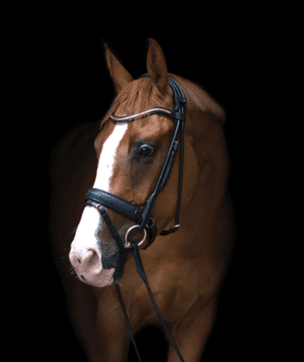 "Utzon Equestrian ""Olympic bridle"""